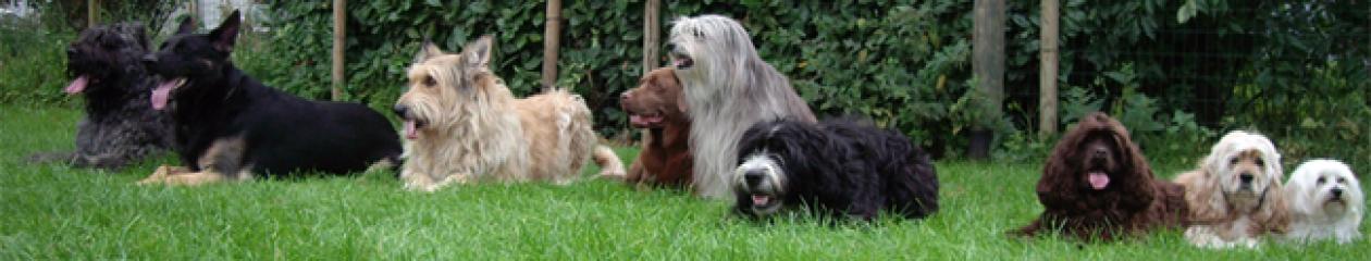 Adler Dogs