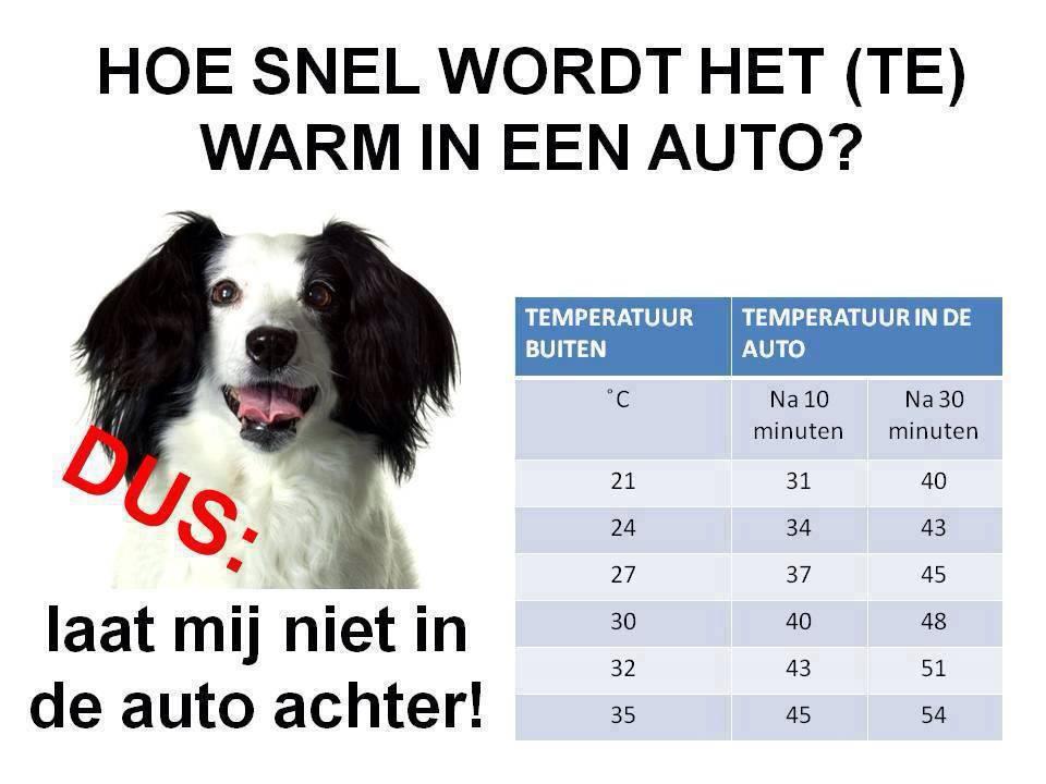 Hond in auto niet achter laten